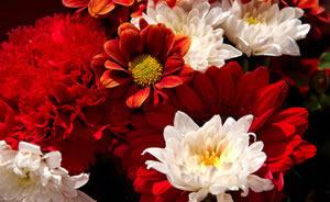 crveno cvece